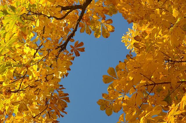 chestnut leaves 228072_640