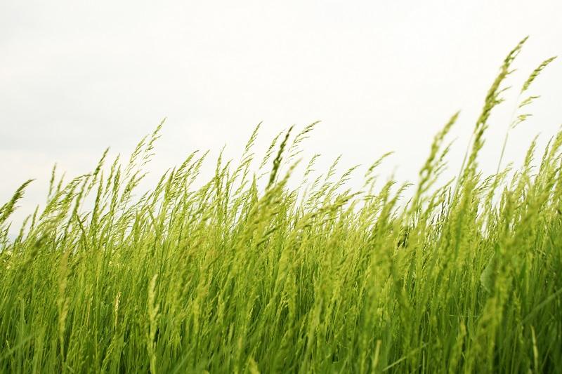 grass_GJKwruv