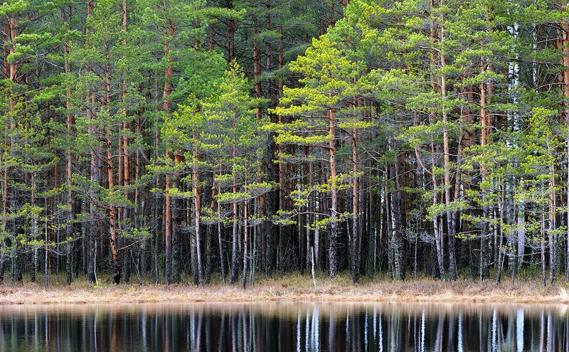 Forest_lake_2_proc_a2 806