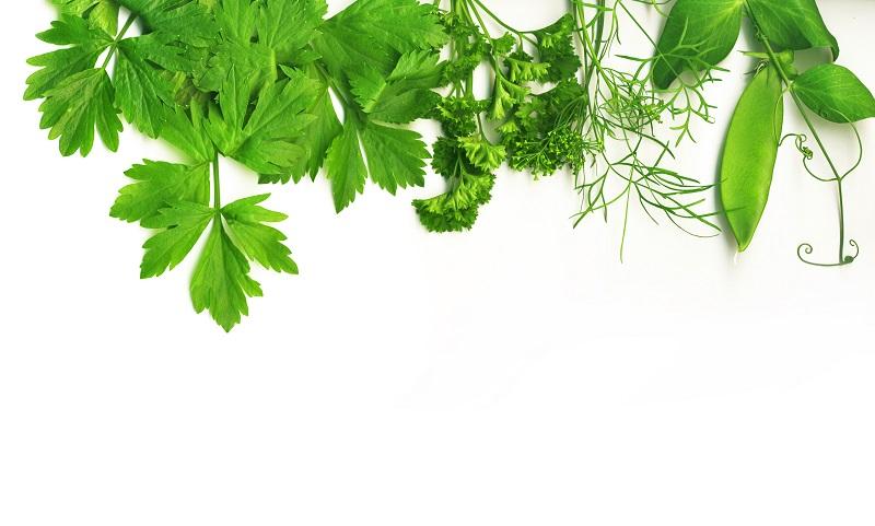 border of fresh herbs_zkhyCTPu