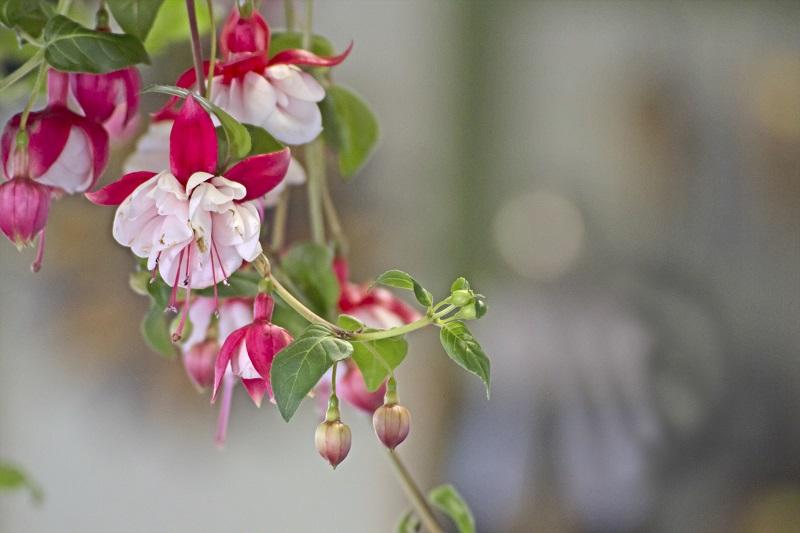flowers twig_z1MN_DK