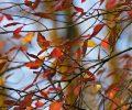 autumn leafs_MJcHI8Ou