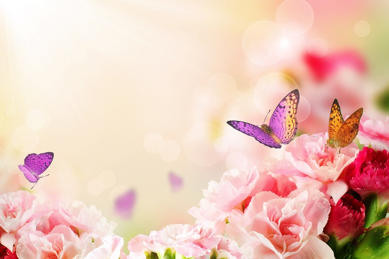butterfly on flowers_fyVh2FrO