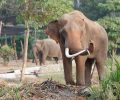 elephant portrait_GJzHw5rd