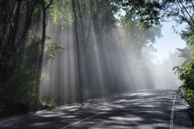 forest road landscape_G1K9ocSO