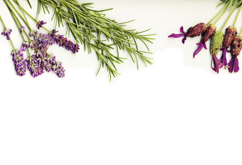 healing herbs lavander and rosemary on a white background isolated_zJq bAPd