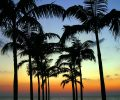 palm tree silhouette_fkKs9Q_O