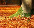 fall foliage 1913485_960_720