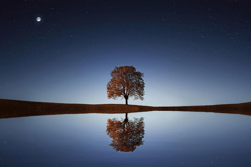 tree 838667_960_720