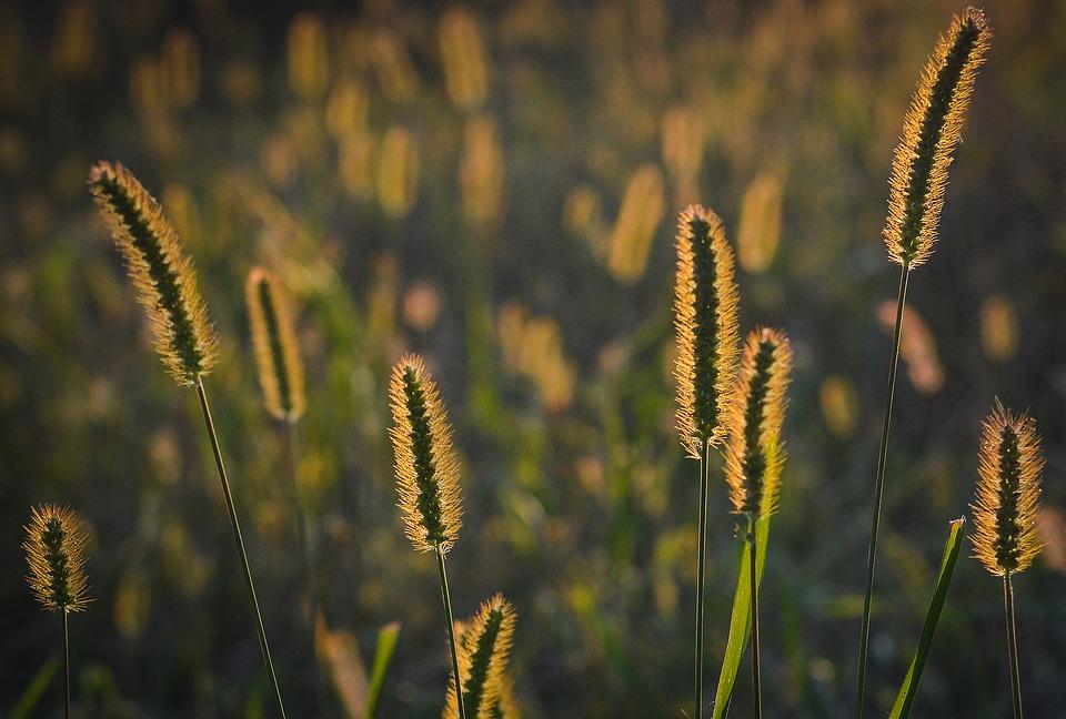grass 1642986_960_720