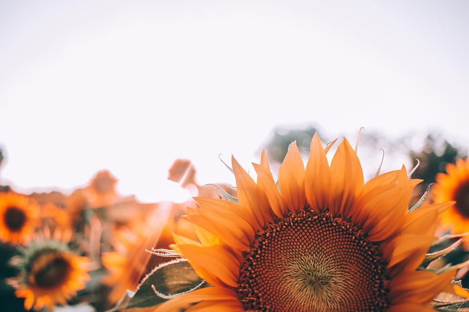 bloom 1866760_960_720