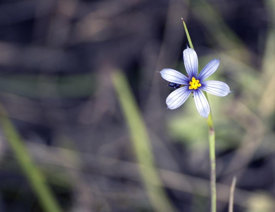 flower-2372998_960_720