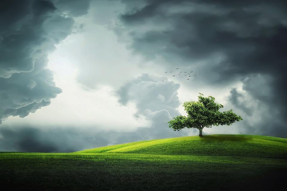 tree-832079_960_720
