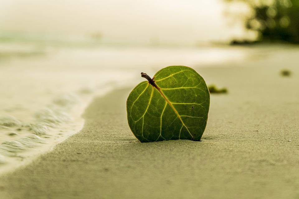 beach-394503_960_720