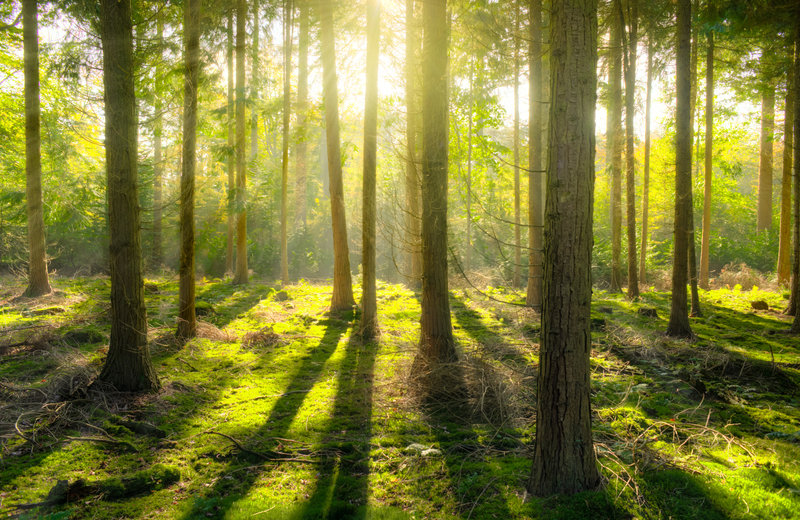 light-shining-through-the-trees-in-the-forest_800