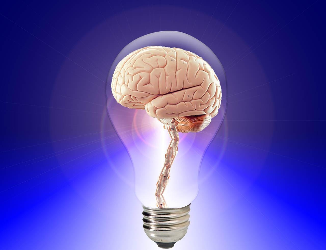 brain-20424_1280