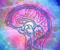 brain-4372153_1280