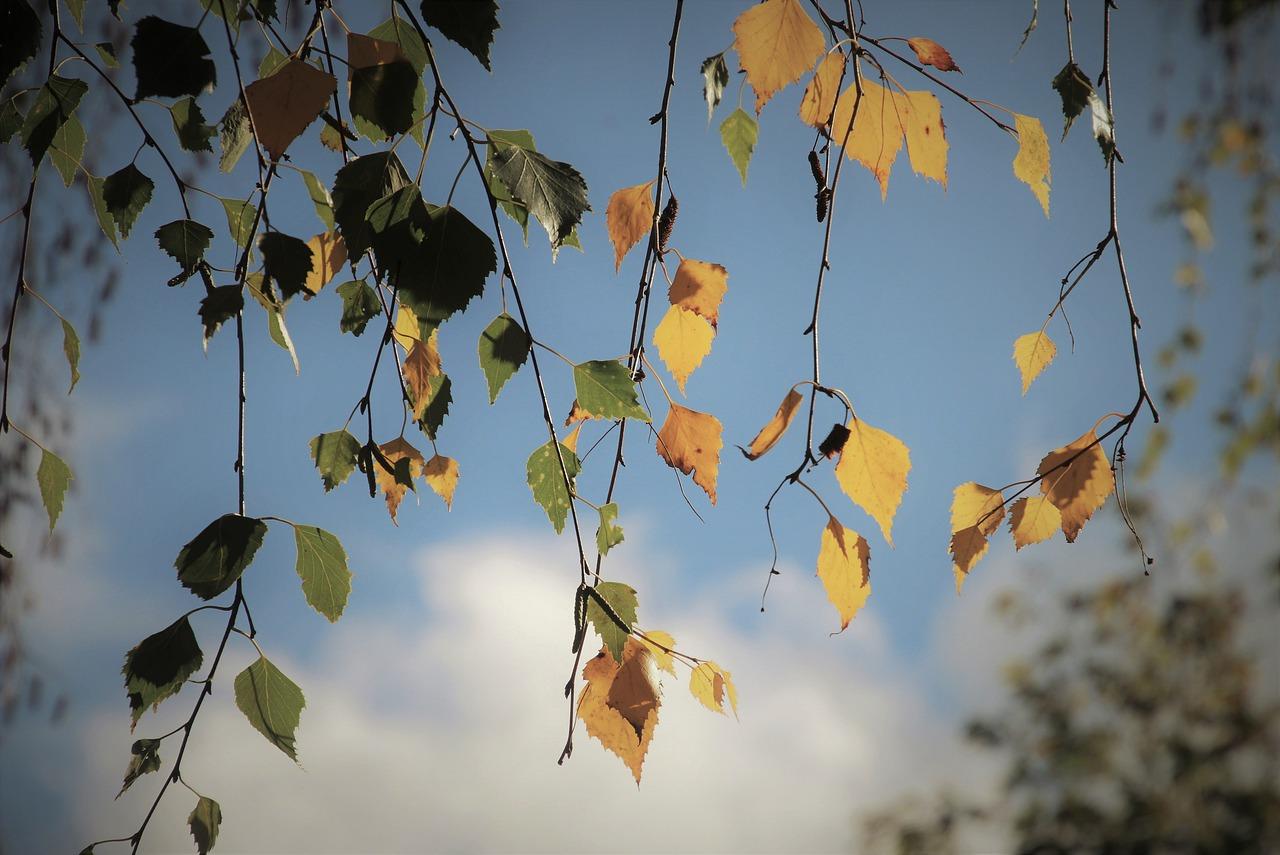 autumn-4542837_1280