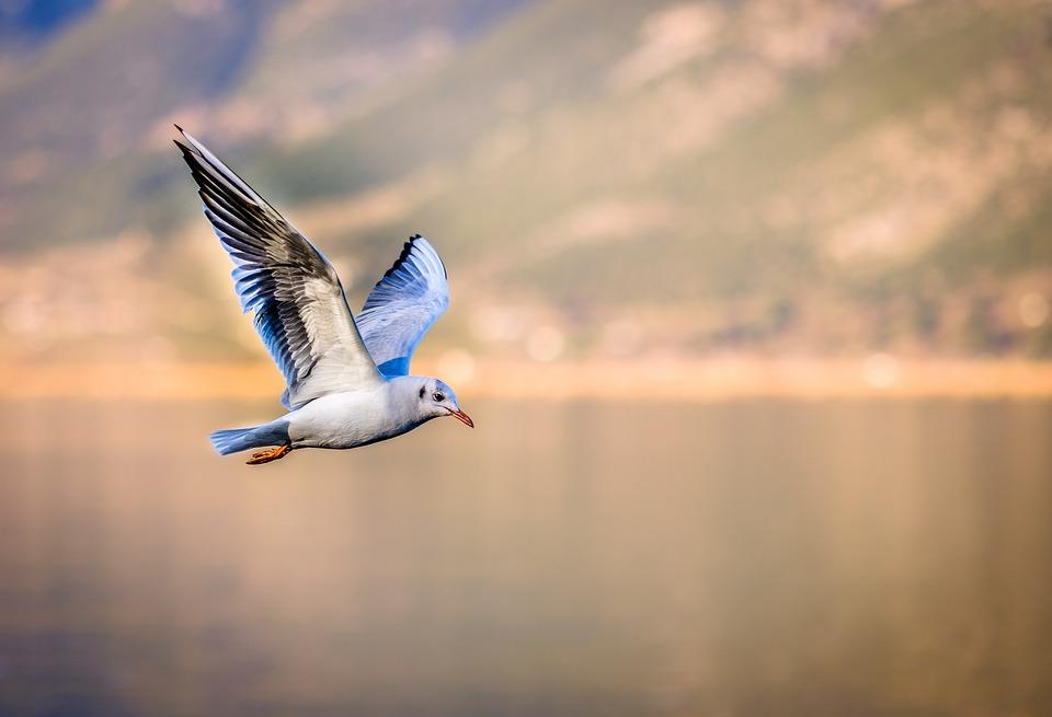 bird-3158784_960_720