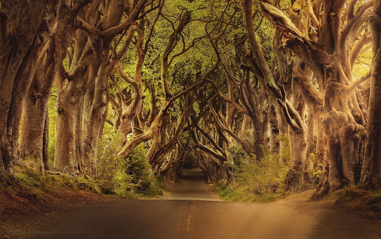 trees-3464777_1280 (1)